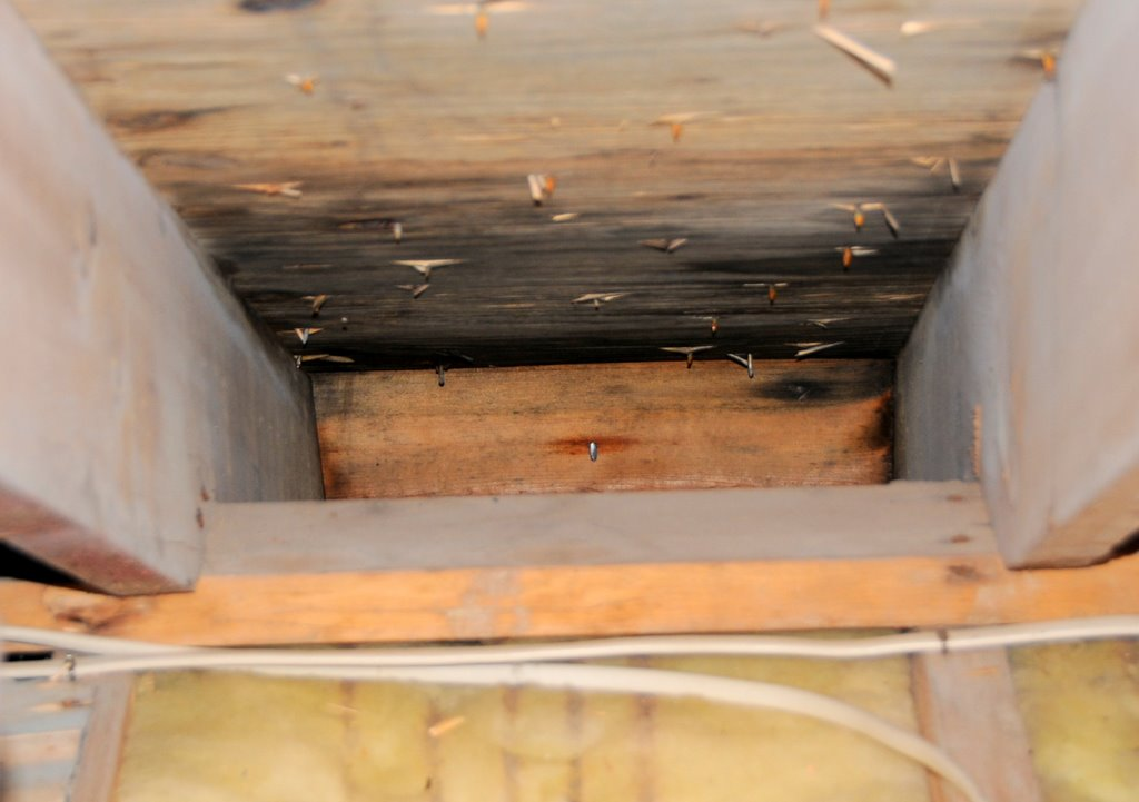 Mold And Wood Starting To Rot Due To Excess Attic Humidity